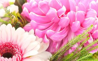 Flores4you