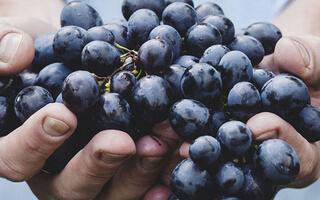 Uva y Cebada