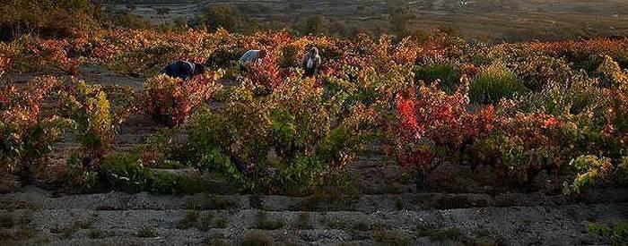 Un equipo de amantes de los vinos