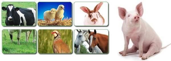 Especialistas en instalaciones agrícolas