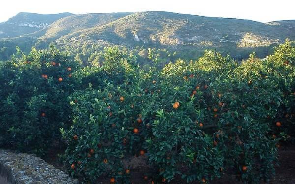 El portal web de Naranjas Tradicionales